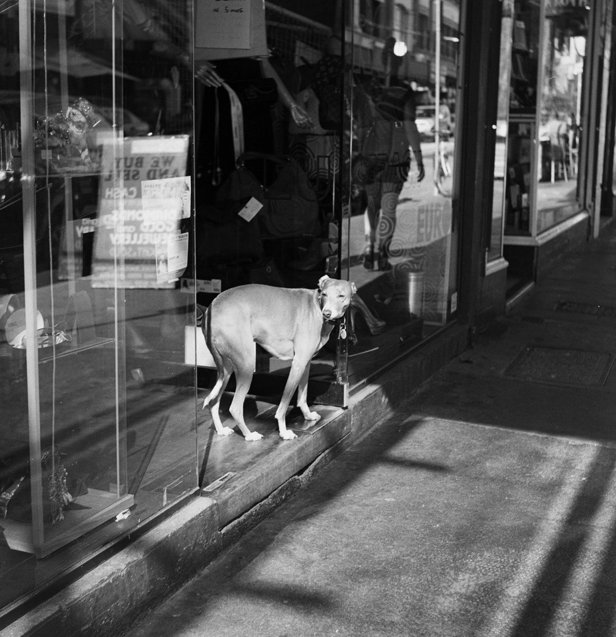 Watch dog, Chapel Street | Meopta Flexaret | Kodak Tri-X
