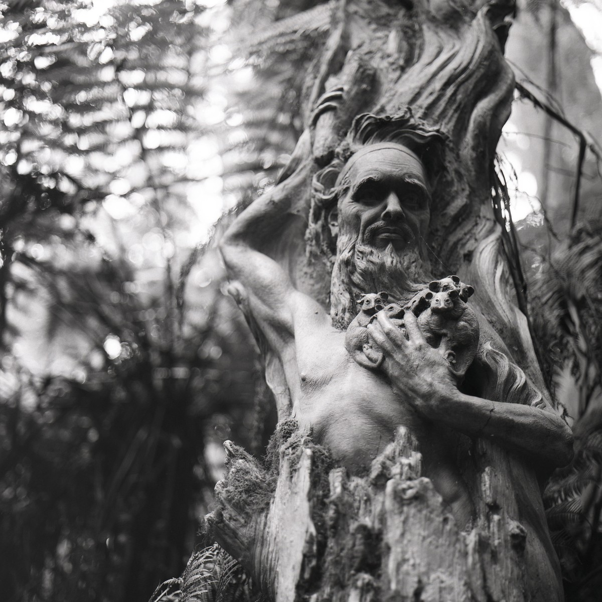William Ricketts Sanctuary, Kalorama | Hasselblad 500C | Fujifilm Acros 100