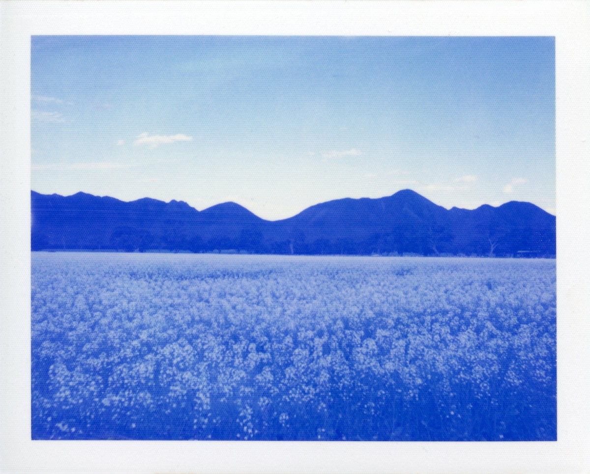 Canola Fields, Grampians | Polaroid 220 | expired Polaroid Blue Film